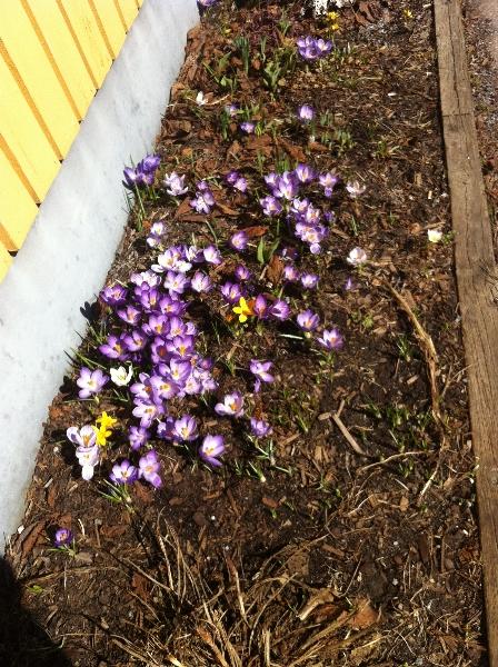 Våren 1