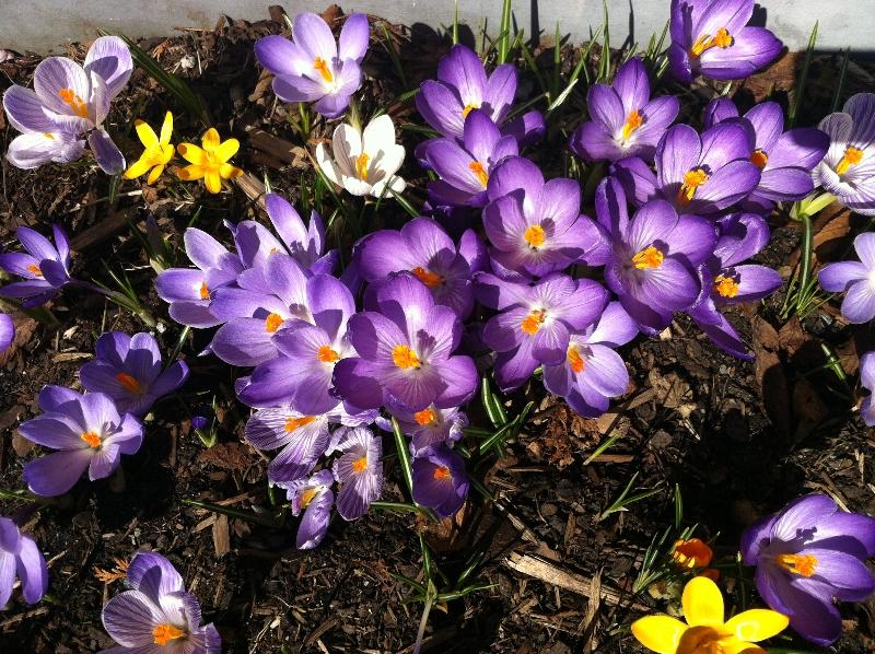 Våren 2