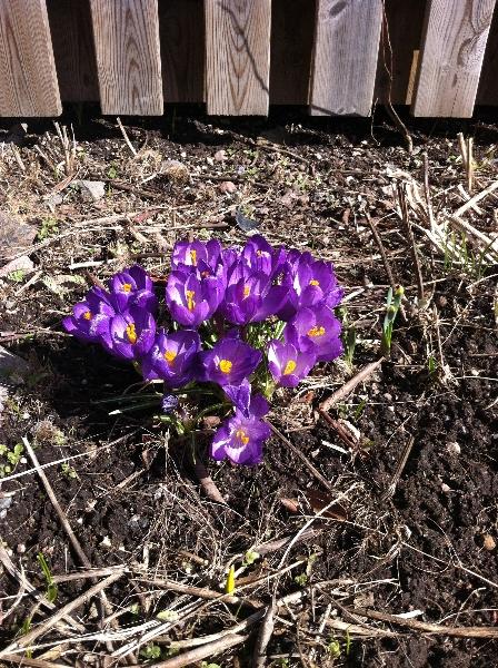 Våren 3