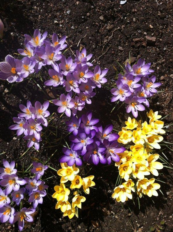Våren 10