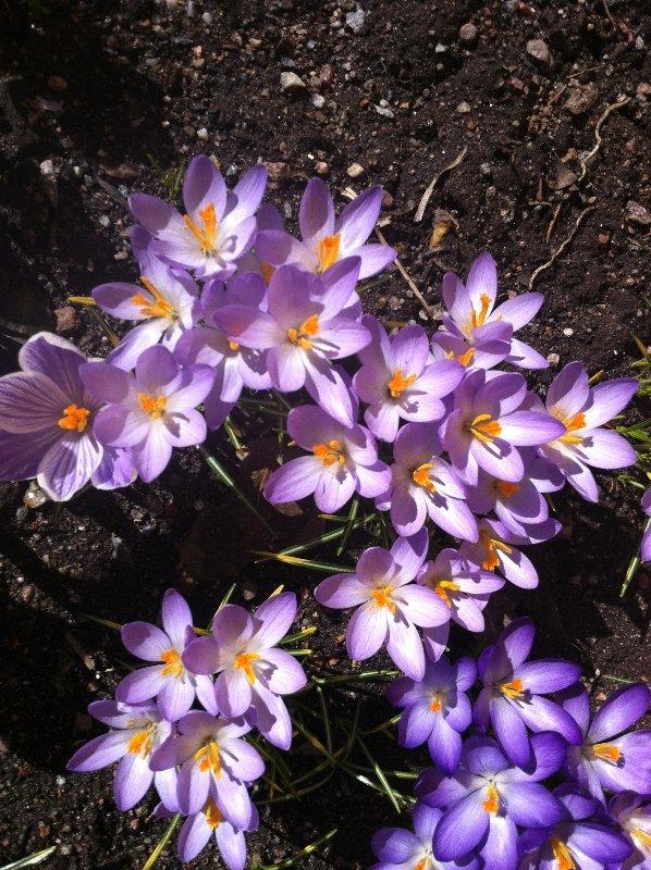Våren 11